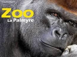 visite zoo palmyre poitou charente